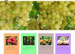 Web de la multinacional de fertilizantes Nutritec